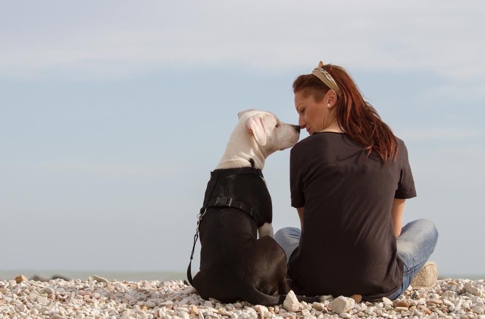 ビーチに座る犬と飼い主