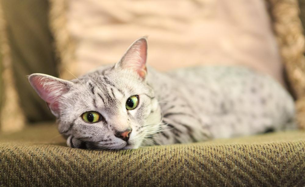 椅子で休む猫