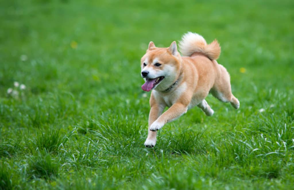 公園を走る犬