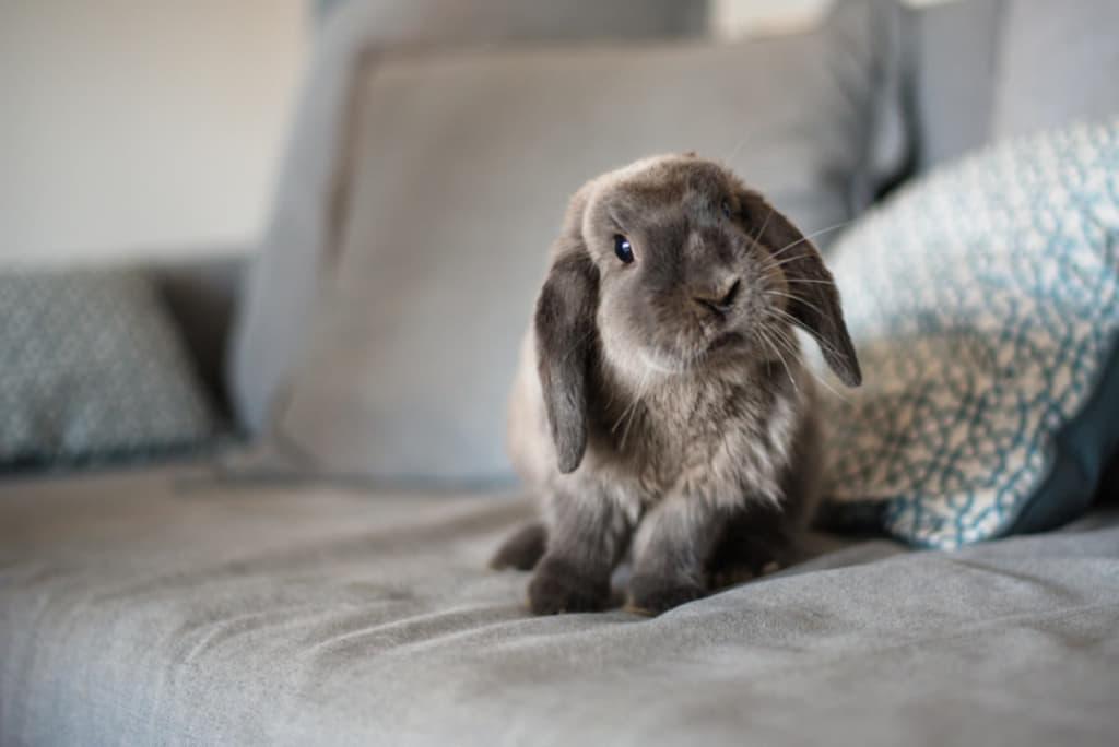 ソファーに座るうさぎ