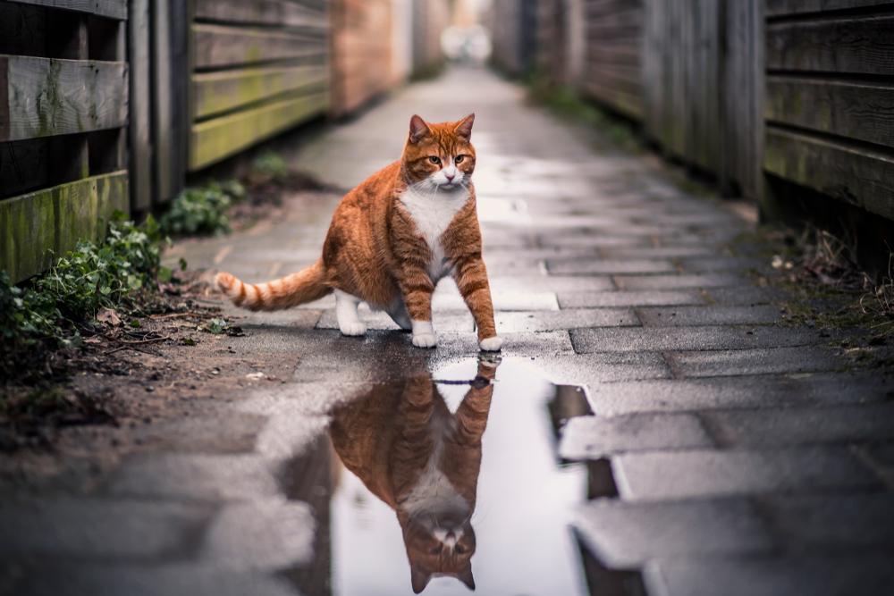 路地を歩く猫