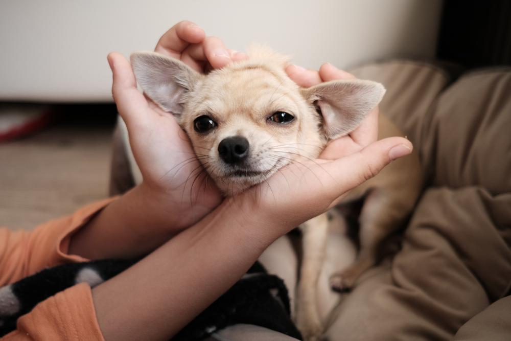 甘える子犬