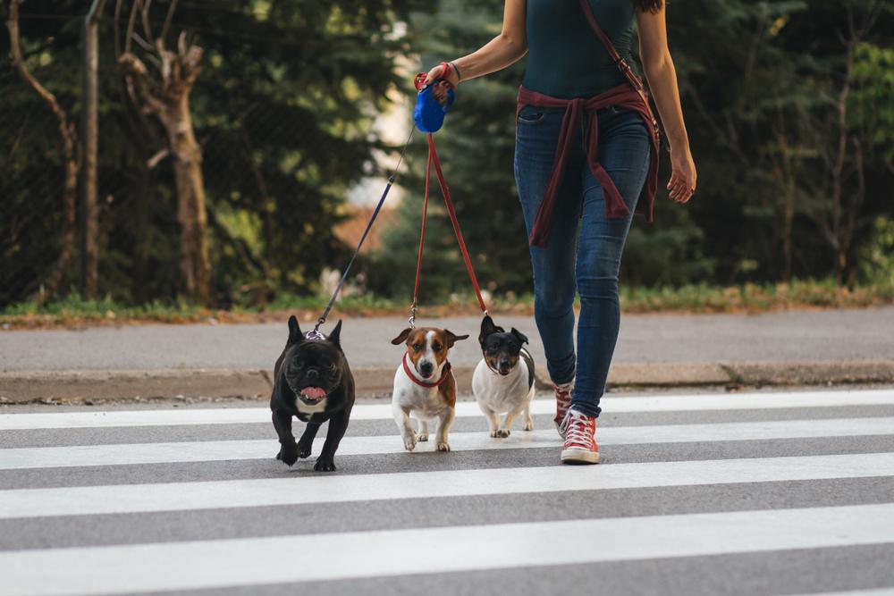 犬 散歩 仲良し