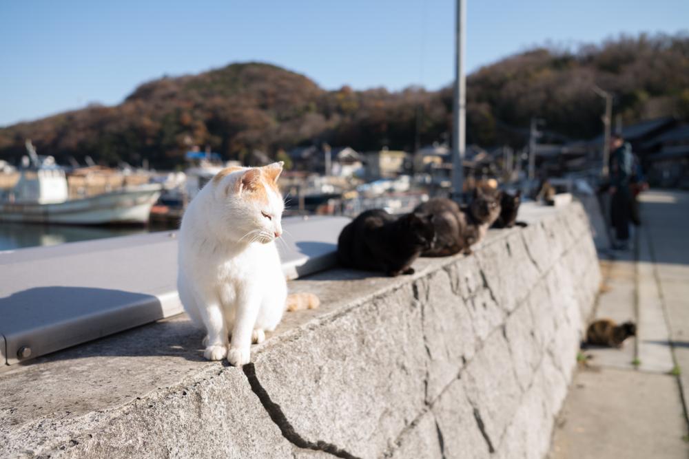 海の近くに住む猫たち