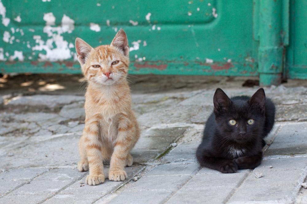 道端で休む猫たち