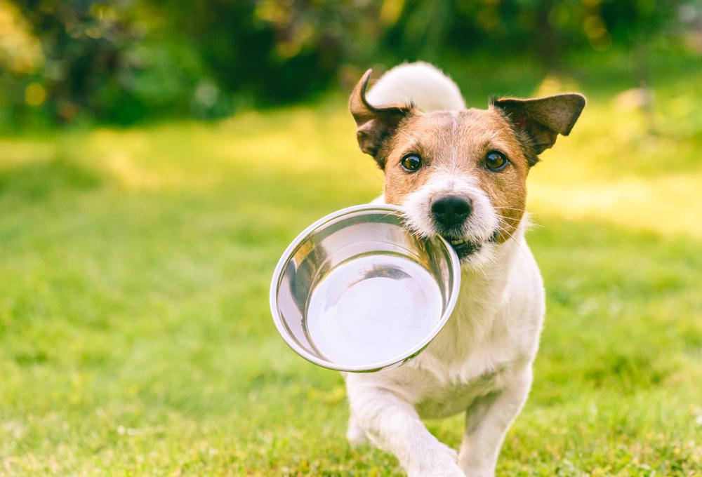 犬 公園 食器