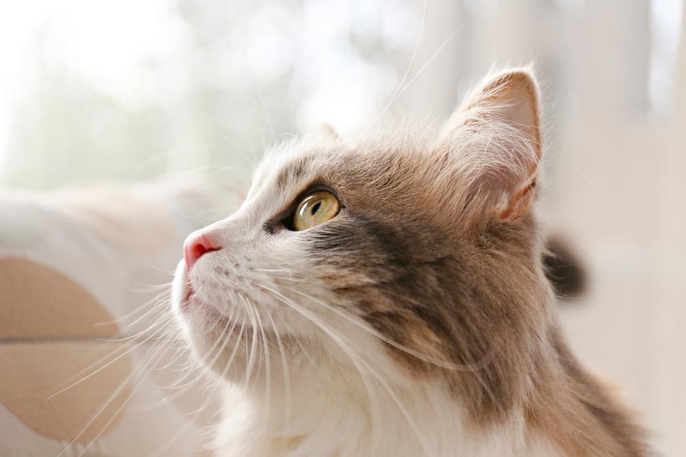 猫 ソファー