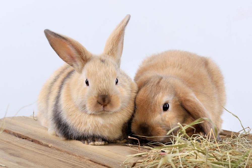 仲良く遊ぶウサギ