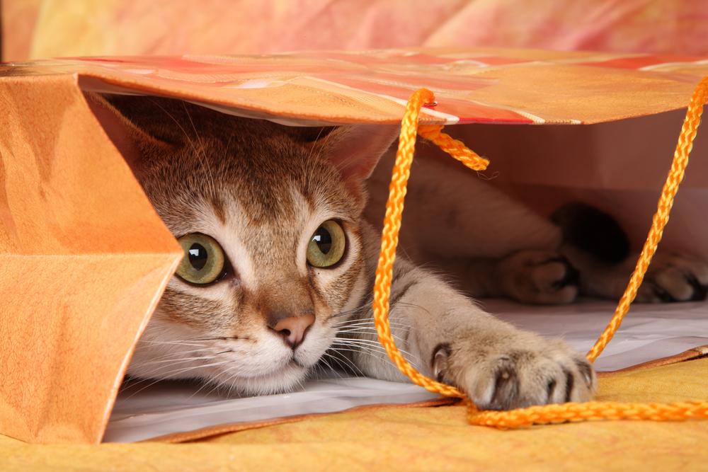 紙袋に隠れる猫