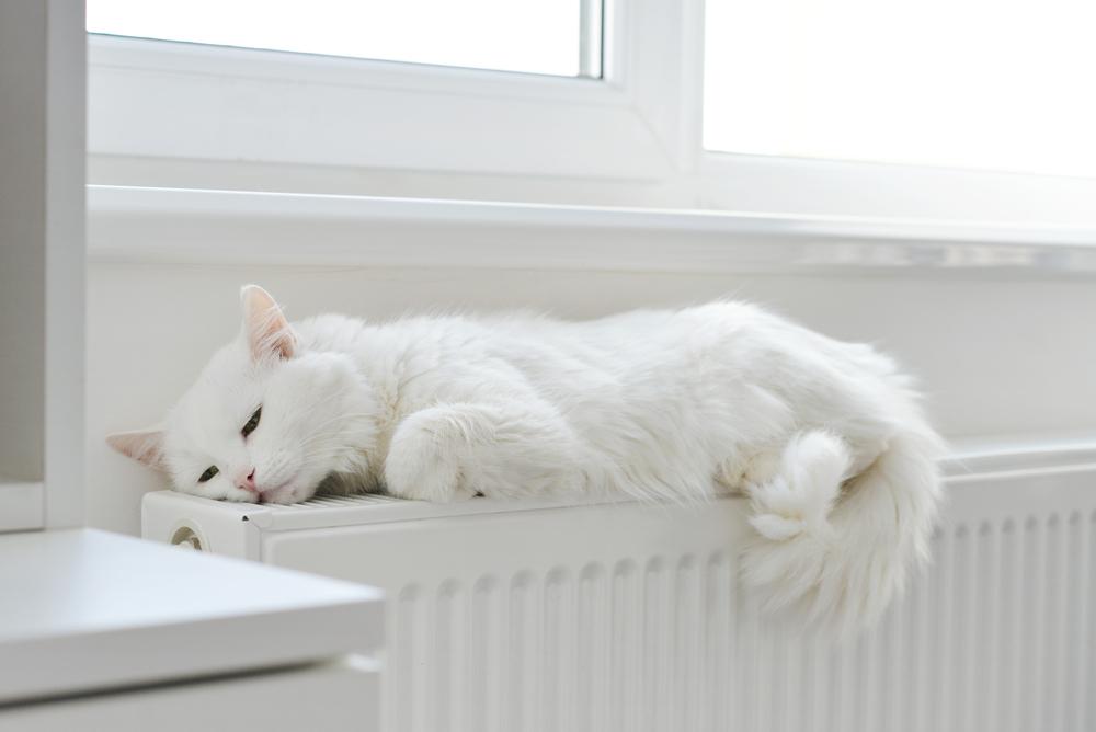 ファンヒーターで温まる猫