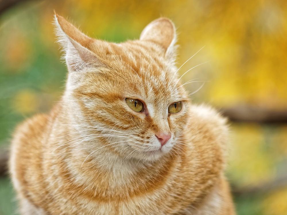 猫 ひなたぼっこ