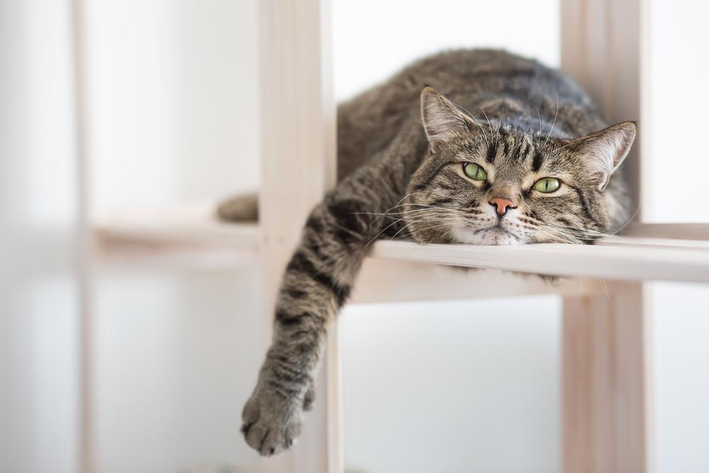 棚で休む猫