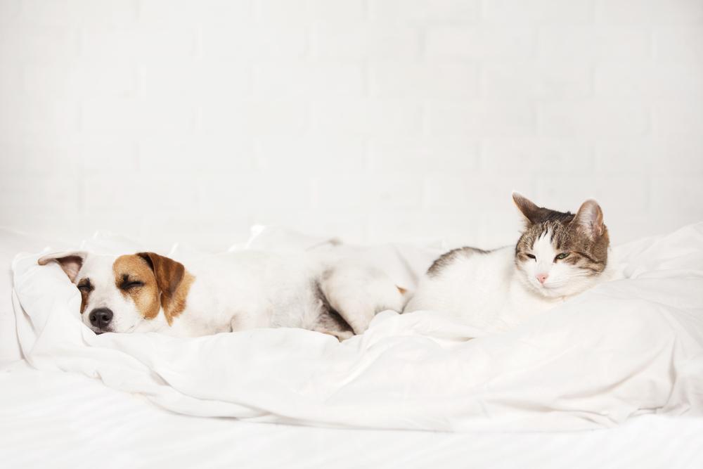 ベッドの上の犬と猫