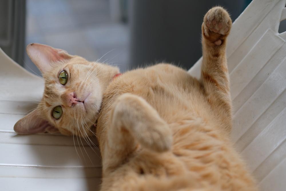 猫 寝る 猫パンチ
