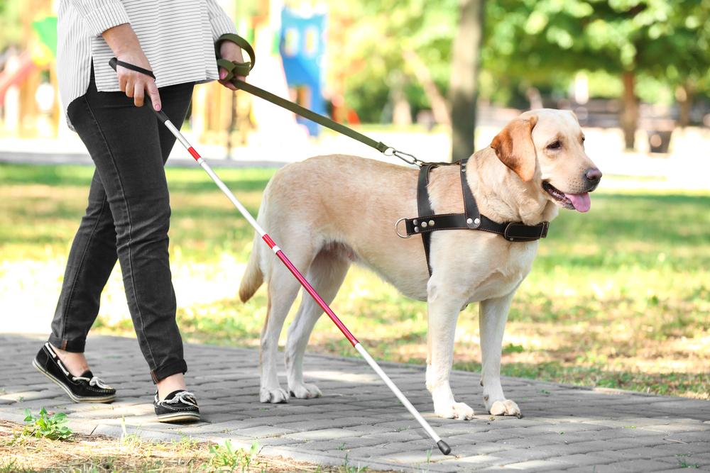 人を誘導する補助犬