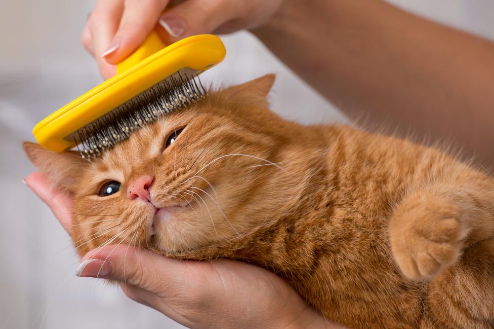 毛をとかされる猫