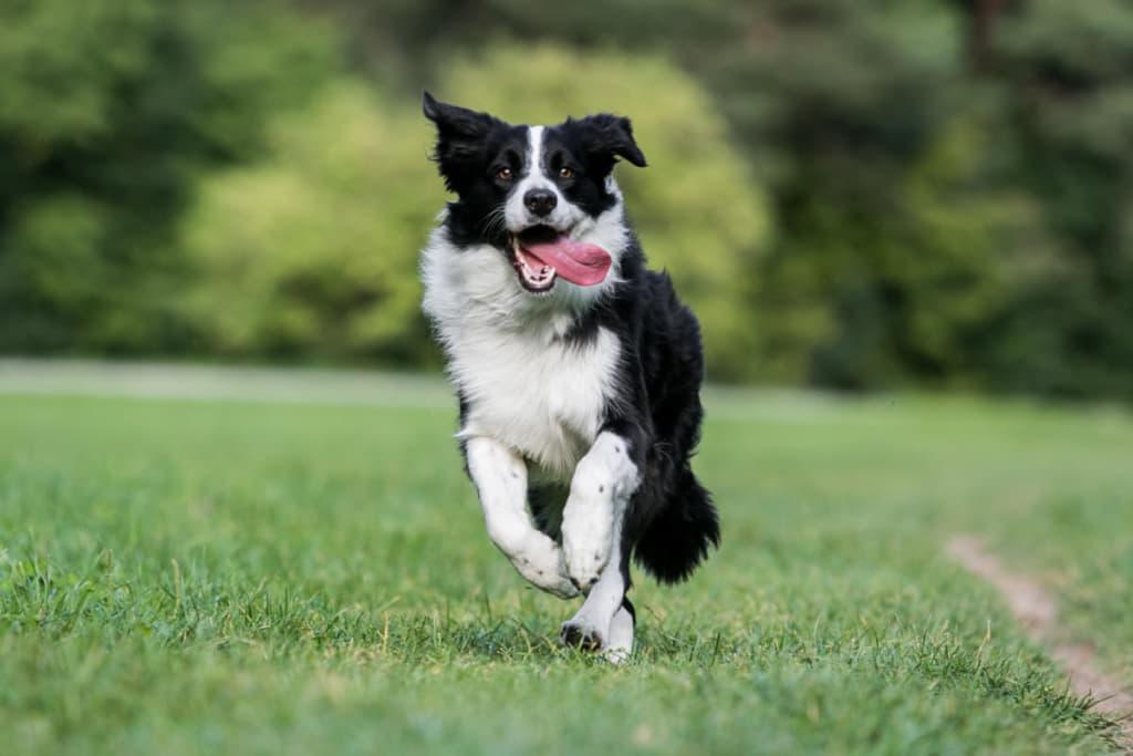 庭を走る中型犬