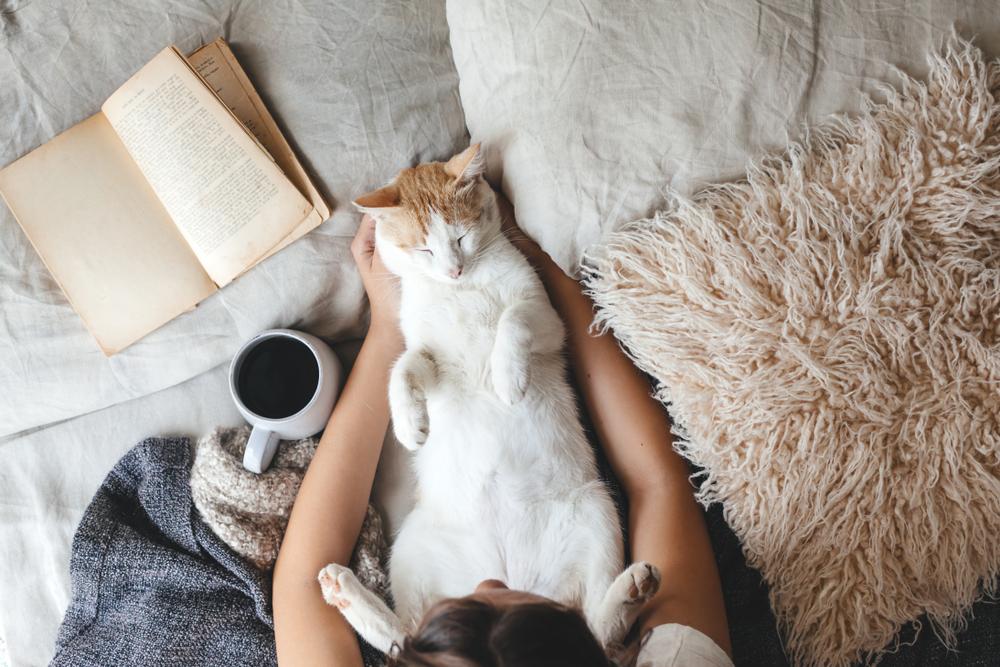 ベッドの上で飼い主と寝る猫