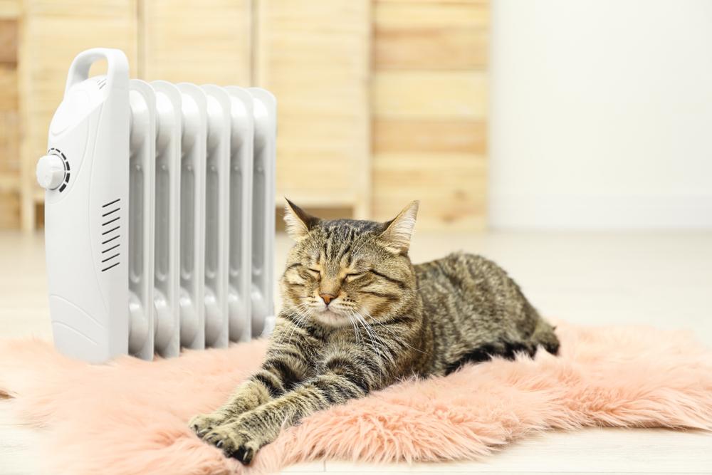 ストーブの前で温まる猫