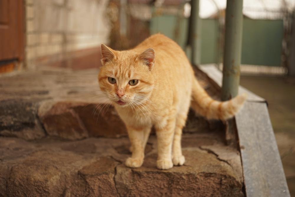 尻尾を下げる猫