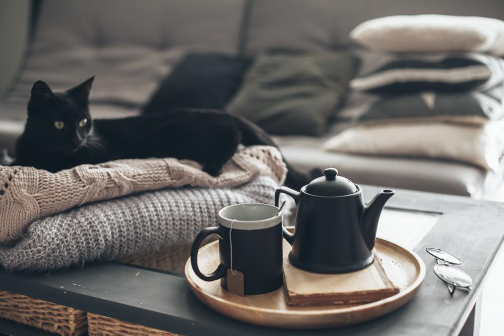 おしゃれにくつろぐ黒猫