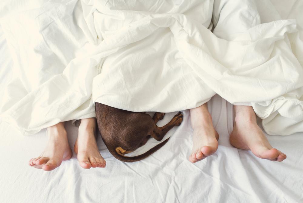 飼い主とベッドで寝る犬