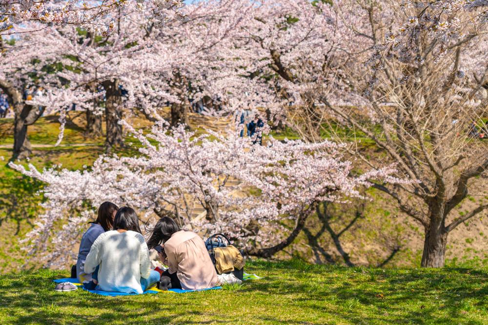 桜の木の下でお花見