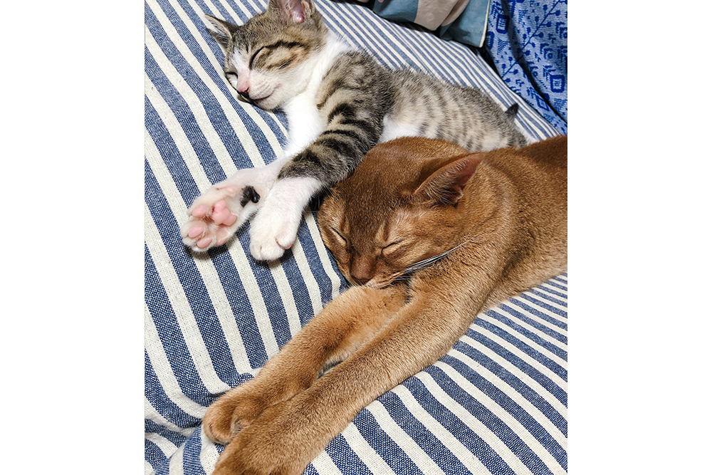 寝転ぶ二匹の猫
