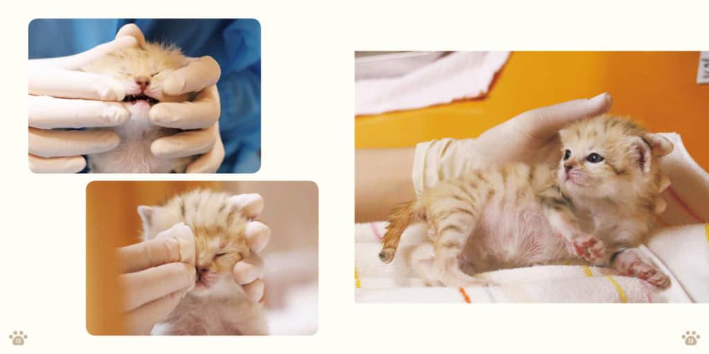 人工哺育では、飼育員が親代わりとなって赤ちゃんの成長をサポートする。