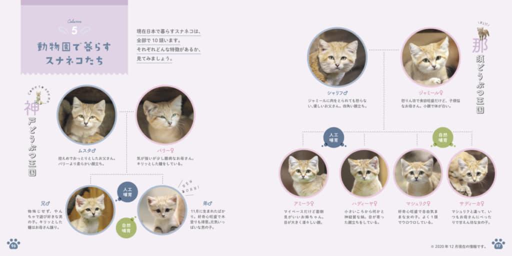 那須どうぶつ王国、神戸どうぶつ王国で暮らすスナネコたちの家系図。