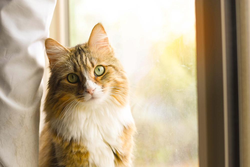 窓際で座る猫