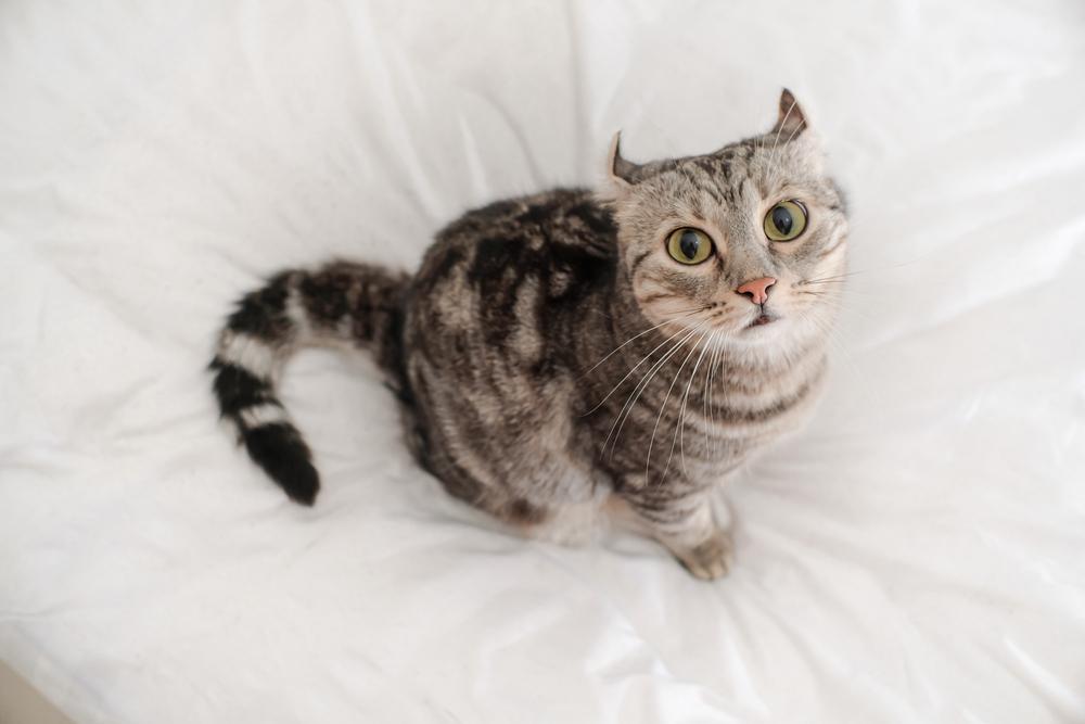 ベッドで見上げる猫