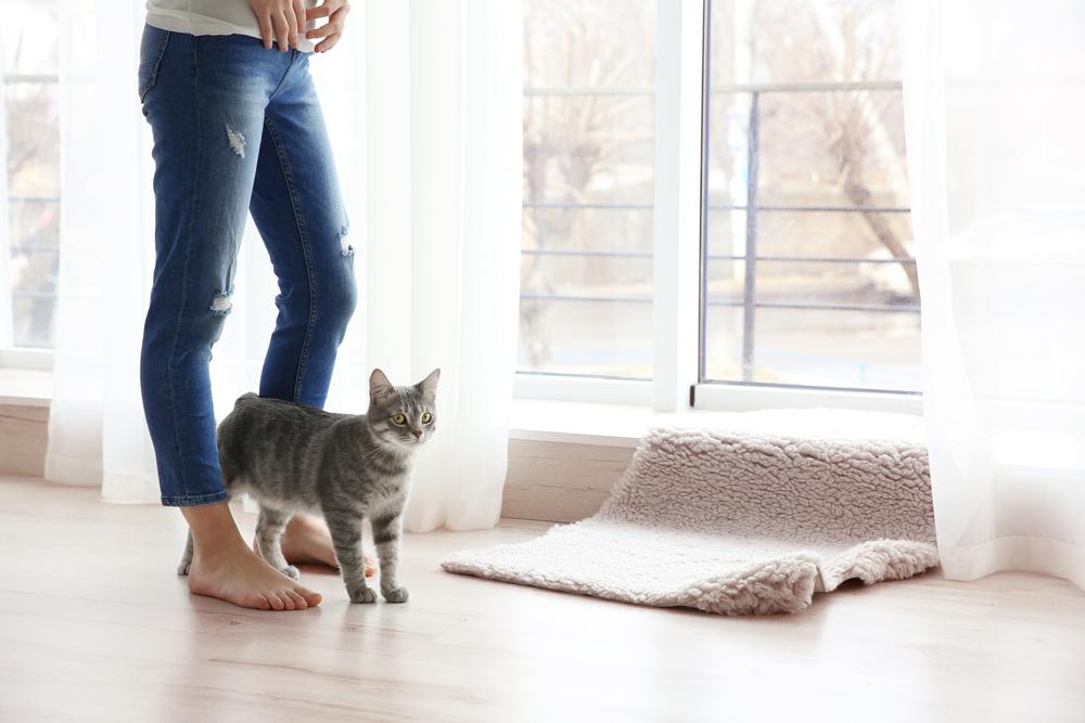 飼い主の足の下にいる猫