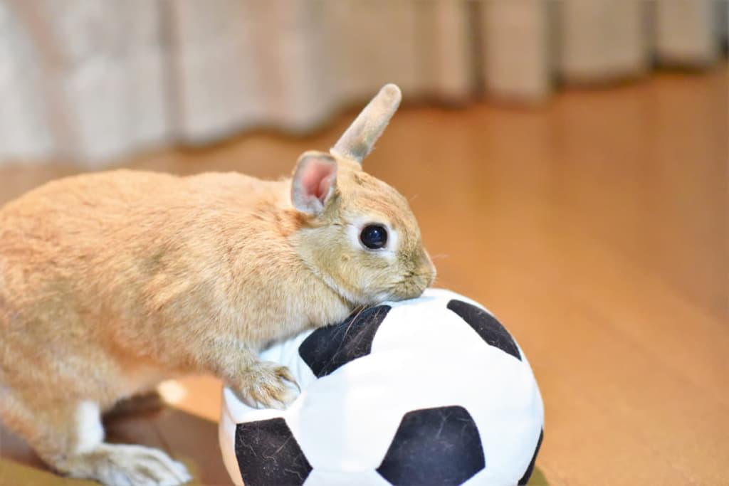 サッカーボールで遊んでいるうさぎ