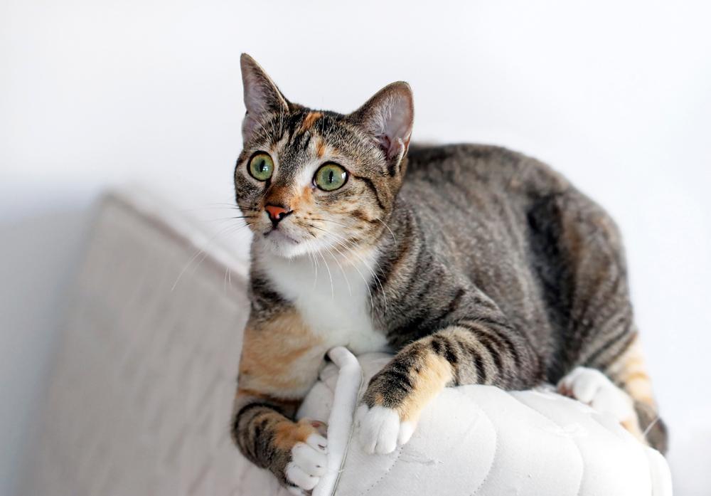 ソファに乗る猫