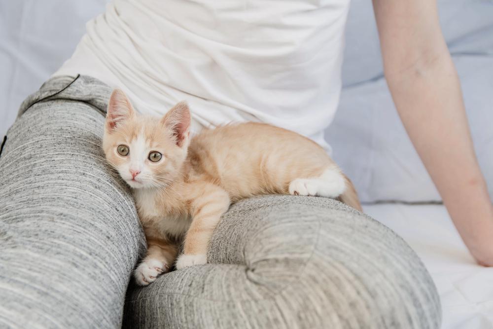 飼い主の足の上に乗る猫