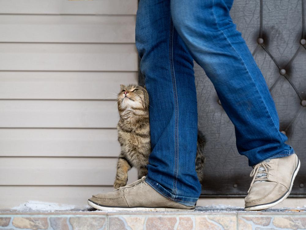 飼い主の足にくっつく猫