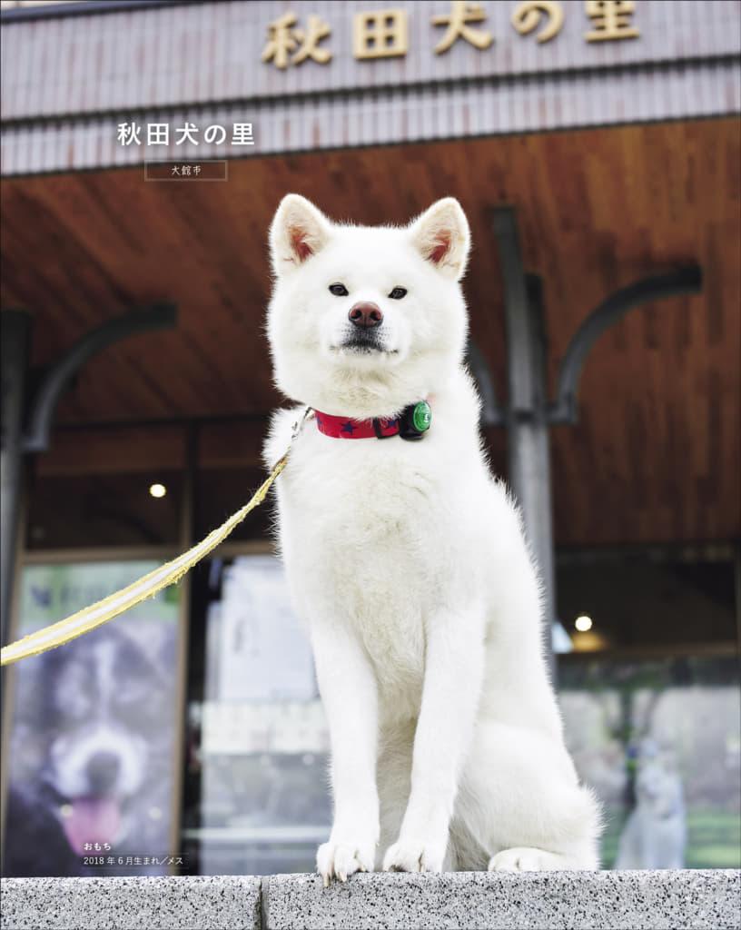 秋田犬に会うことができる、秋田県内の施設や体験、宿を紹介。