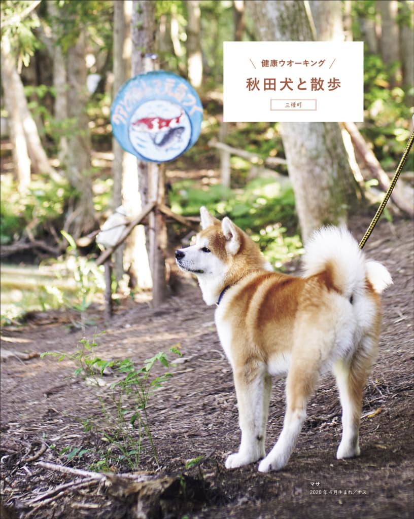 秋田犬と、その飼い主のこと、会える時期や時間帯、施設の周辺地図などを「会える」情報が満載。