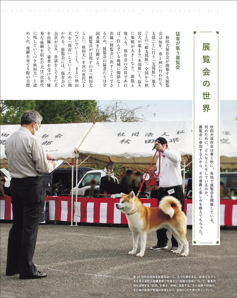 秋田犬保存会が毎年、春と秋に各地で開催している展覧会を、秋田犬ファンの視点で取材。知りたいこと・分からないことを、秋田犬保存会審査部の協力を得て、まとめています。