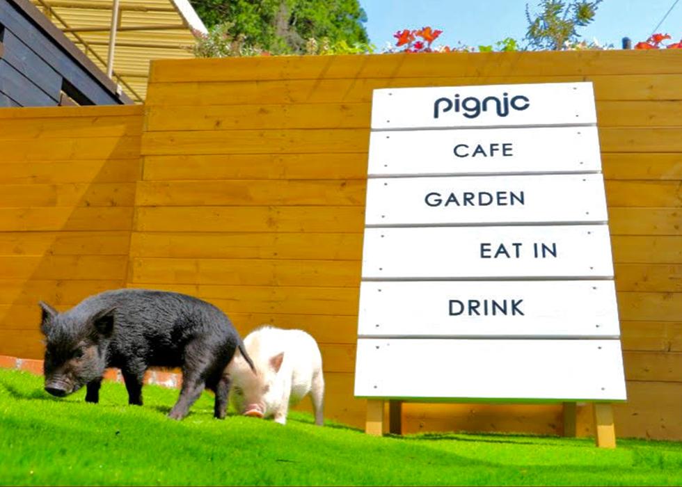 「pignic farm&café」(ピグニックファームアンドカフェ)