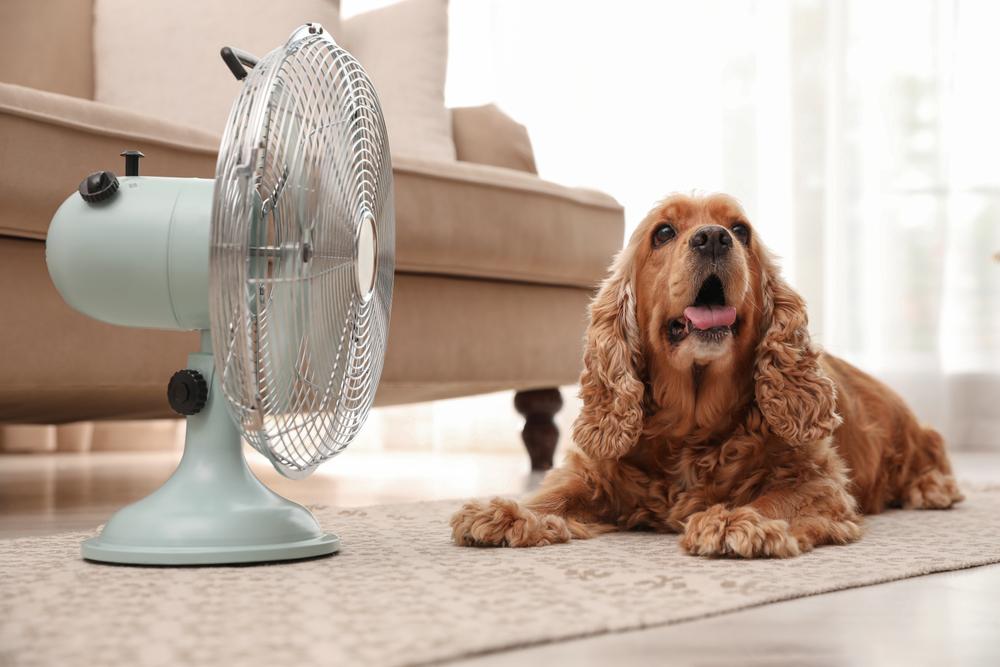 扇風機の前にいる犬