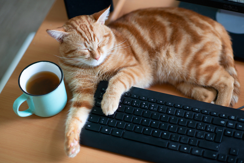 パソコンのキーボードの上に乗る猫