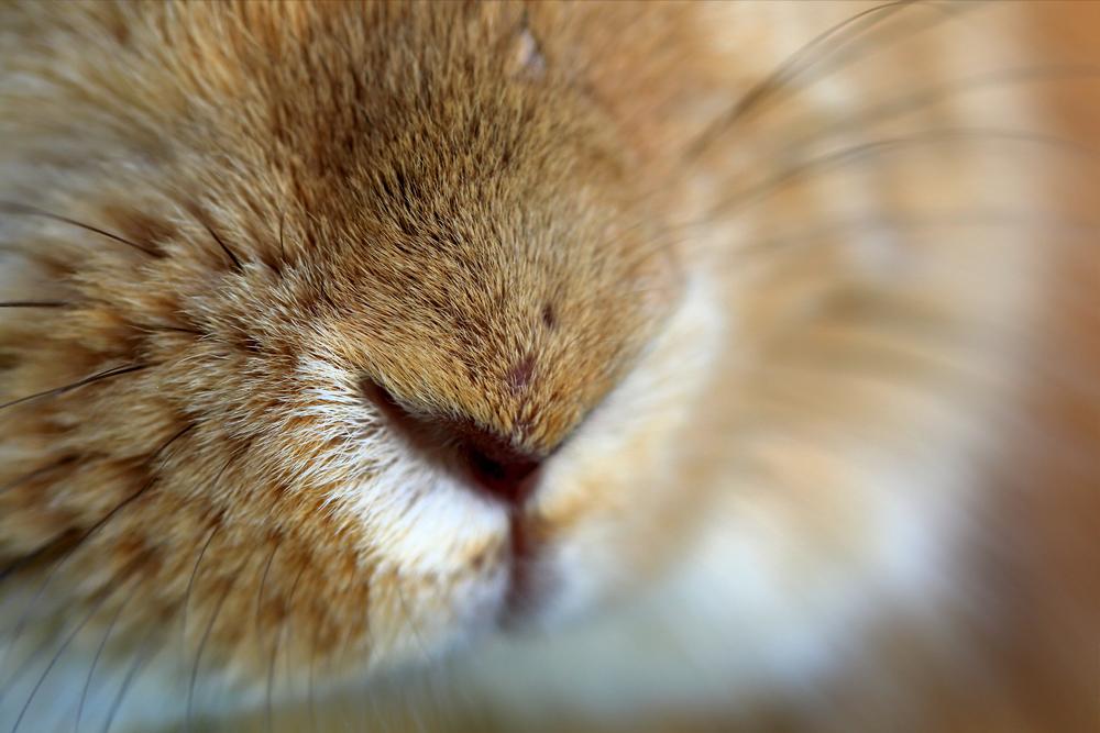 うさぎはなぜ鼻をヒクヒクさせているの?