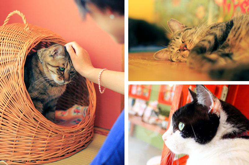 「キャットシグネットリング」の収益は、ネコリパブリックの運営のために活用され、保護猫の命をつなぐために保護猫カフェや保護猫シェルターの運営継続のために、そして保健所に収容された殺処分あされるはずだった猫たちの引き出し、里親探しの活動にに役立ちます。