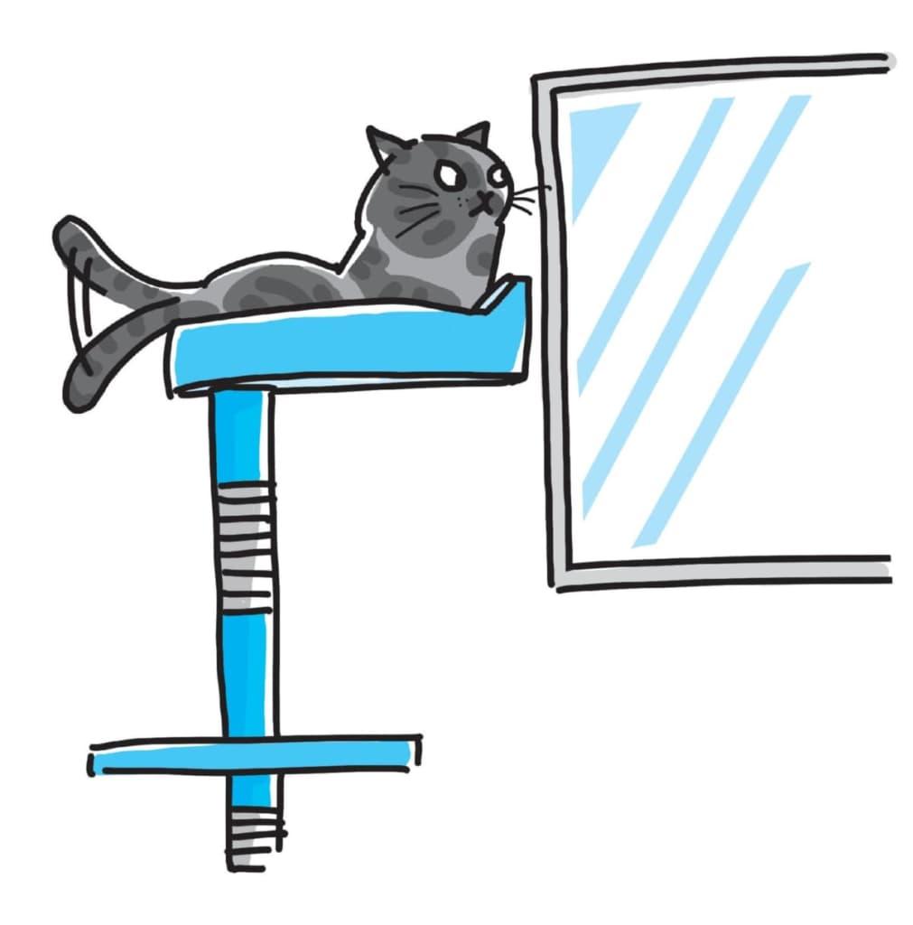 """『猫にいいこと大全』から意外に知られていない""""猫にいいこと""""3つをご紹介③窓の外は見せなくてもいい"""