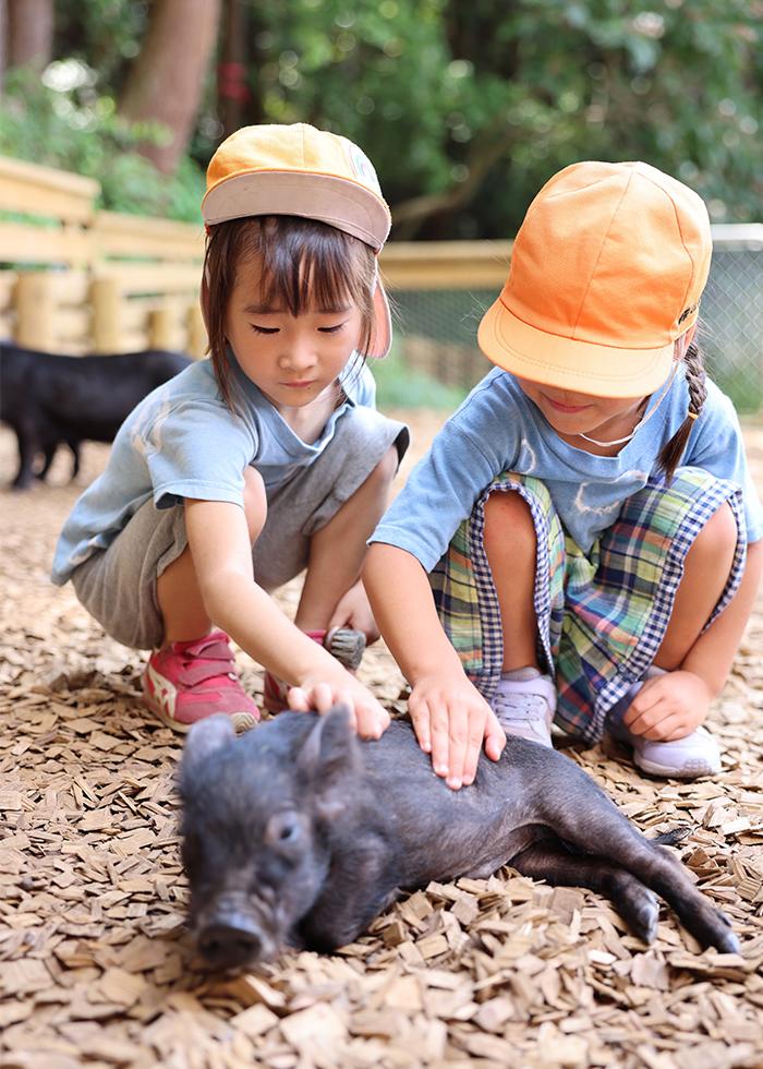 「pignic farm&café」にて貸し切り体験学習