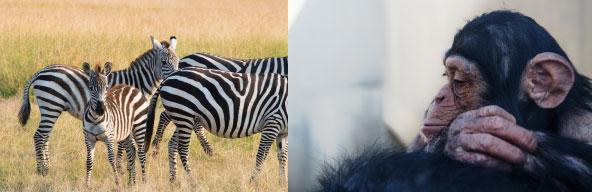 売り上げの一部は絶滅危惧種の動物を救うための活動に役立てられます